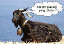 Sapi Putih Mencari Kambing Hitam | Lud & Rita